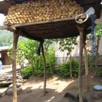 storing_maize